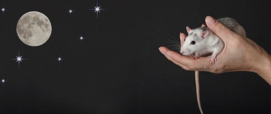 לכידת עכברים וחולדות